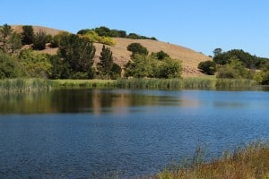 Beautifult Boronda Lake within the Palo Alto Foothills Park