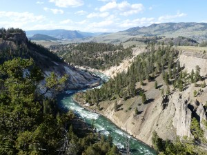 Yellowstone River meandering through the canyon on a clear day