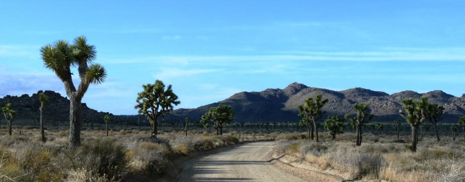 Joshua Tree Nat'l Park – 2011